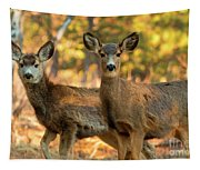 Mule Deer In The Woods Tapestry