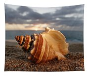 North Shore Seashell Tapestry