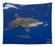 Oceanic Whitetip Shark Tapestry