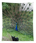2 Peacocks And A Black Pussy Cat Tapestry