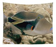 Picasso Triggerfish Tapestry