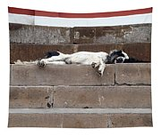 Street Dog Sleeping On Steps Tapestry