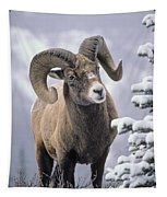 25084, Bighorn Sheep, Winter, Jasper Tapestry