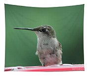 Female Ruby-throated Hummingbird Tapestry