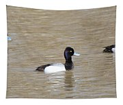 3 Greater Scaup  4060 Tapestry