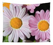 Marguerite Daisy Named Petite Pink Tapestry