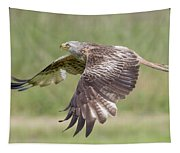 Red Kite Tapestry