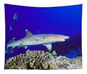 Whitetip Reef Shark Tapestry