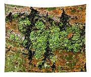 Aspen Bark After The Rain Tapestry
