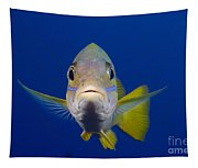Bluestripe Snapper Tapestry