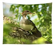 Immature Hooded Merganser Tapestry