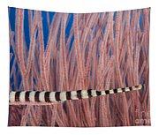 Malaysia, Marine Life Tapestry