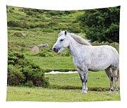 A Beautiful White Dartmoor Pony, Devon, England Tapestry