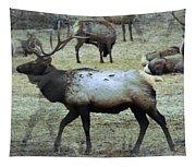 A Bull Elk  Tapestry