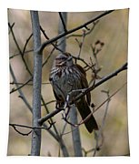 A Chipping Sparrow Tapestry