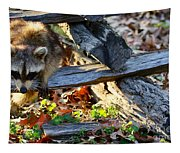 A Foraging Raccoon Tapestry