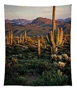 A Golden Sonoran Evening  Tapestry