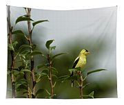A Goldfinch In A Pear Tree Tapestry