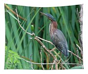 A Green Heron By The Canal Tapestry