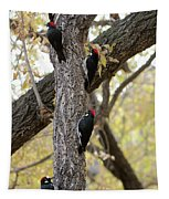A Group Of Acorn Woodpeckers In A Tree Tapestry