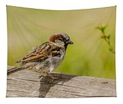 A House Sparrow Tapestry