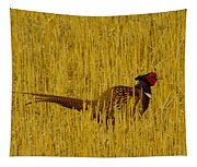 A Pheasant Looking For A Mate Tapestry