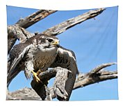 A Prairie Falcon Against A Blue Sky Tapestry