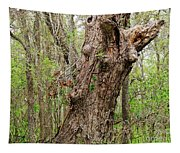 A Spring Beauty Tapestry