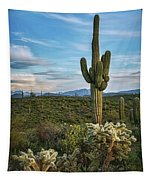 A Spring Evening In The Sonoran  Tapestry