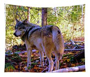 A Wolf Gazes Back Tapestry
