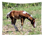 A Young Painted Colt  Tapestry