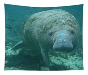 About To Meet A Manatee Tapestry