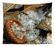 Acorn Cap Filled With Snow Tapestry