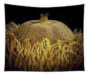 Acorn Emerging Tapestry