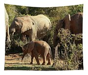 Addo Elephant Family Tapestry