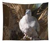 African Collared Dove 3 Tapestry