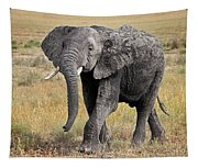 African Elephant Happy And Free Tapestry