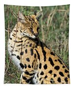 African Serval In Ngorongoro Conservation Area Tapestry