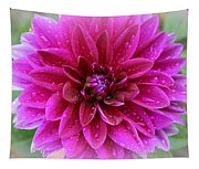 After The Rain - Purple Dahlia Tapestry