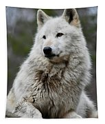 Alawa The Wolf Rests Tapestry