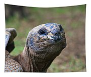 Aldabra Giant Tortoise's Portrait Tapestry