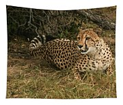 Alert Cheetah Tapestry