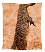 Alert Mongoose Tapestry
