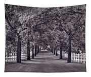 Allee Way Bw Tapestry