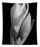 Amaryllis In Black And White Tapestry
