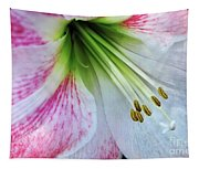 Amaryllis - Lily Tapestry