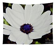 Amazing White African Daisy Tapestry