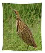 American Bittern Looking Up Tapestry