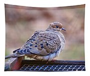 American Mourning Dove Tapestry