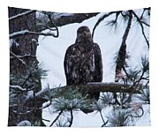An Eagle Gazing Through Snowfall Tapestry